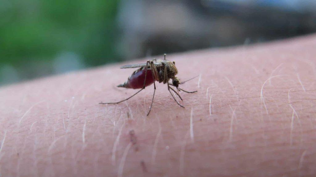 Le moustique est-il responsable du paludisme ?
