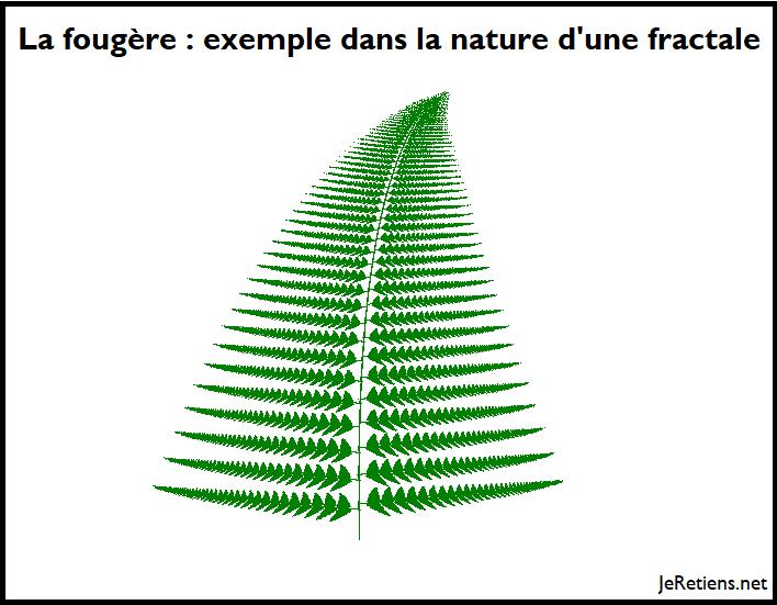Fractale dans la nature